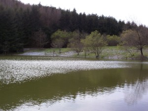 Lago la Penna, Sangineto
